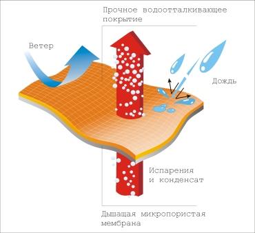 мембрана